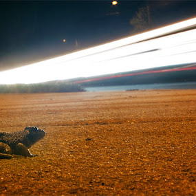 I found Frogger! by Robert Harmon - Animals Amphibians ( animals, time lapse, light trails, long exposure, frogs )