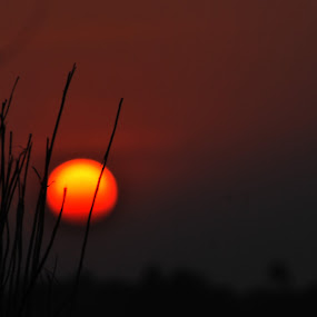 The Sunset Through Jute Stick  by Abhishek Mandal - Backgrounds Nature ( jute, stick, sunset, evening, bengal )