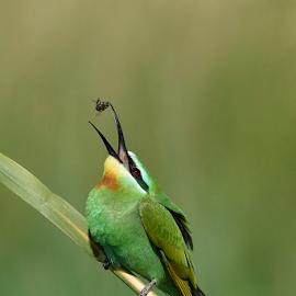 by Amanda Habets - Animals Birds