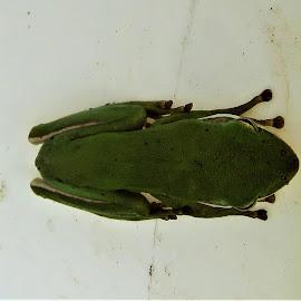 by Denise O'Hern - Animals Amphibians