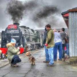 BR 46100 Royal Scot at Holyhead by David Garnett - Transportation Trains ( br 46100, royal scot, holyhead, dog, north wales coast line )