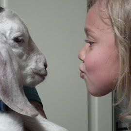 Summer Kisses by Sue Henderson - Babies & Children Children Candids ( kiss, blonde, faces, girl, cute goat, goat, indoors, humorous, KidsOfSummer )
