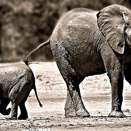 Mom & I by Pieter J de Villiers - Black & White Animals
