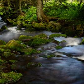 Šumavský potok IV by Dagmar Germaničová - Uncategorized All Uncategorized ( water, brook, rivulet )