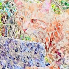 Bertie the cat by Paula Palmer - Digital Art Animals ( abstract, cat, colors, digital art, animal )