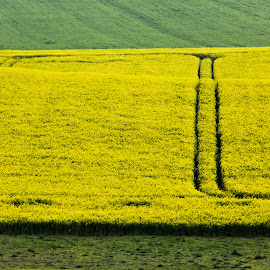 Yellow and green by Comsa Bogdan - Landscapes Prairies, Meadows & Fields ( green, minimalism, beautiful, canvas, enjoy, yellow, landscape, photo, photography, amazing, frame, nature, gorgeous, awesome, outdoor, comsa bogdan, natural, wonderful )