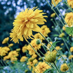 by Elena Lashneva - Flowers Flower Gardens