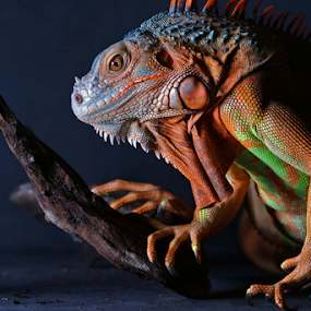 by Arief Setiawan - Animals Reptiles