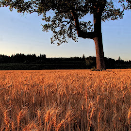 by Jon Morgan - Landscapes Prairies, Meadows & Fields