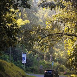Morning vibe by Trisno Harlindo - Nature Up Close Trees & Bushes ( #indonesia, #westsumatera, #kelokkelok, #photography )