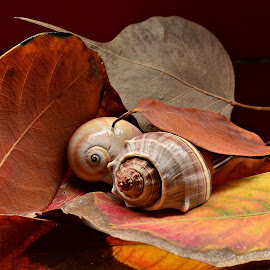 Sea shells on Fallen Leaves by Prasanta Das - Nature Up Close Other Natural Objects ( sea shells, dry, leaves )