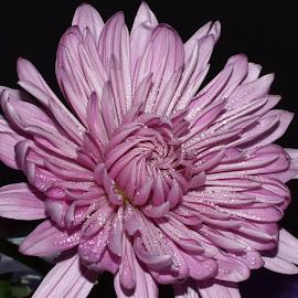 Model Mum by Millieanne T - Flowers Single Flower
