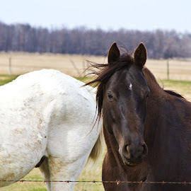 Brown Sassy Horse by Julie Fayant - Animals Horses ( animals, grazing, horse, pastures, farmlife )