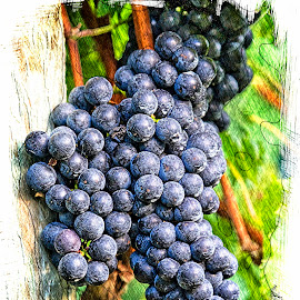 Burntshirt Vineyards by Steven Faucette - Digital Art Things ( grapes, vineyards )