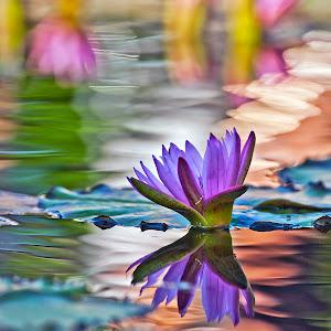 lily gaga.jpg
