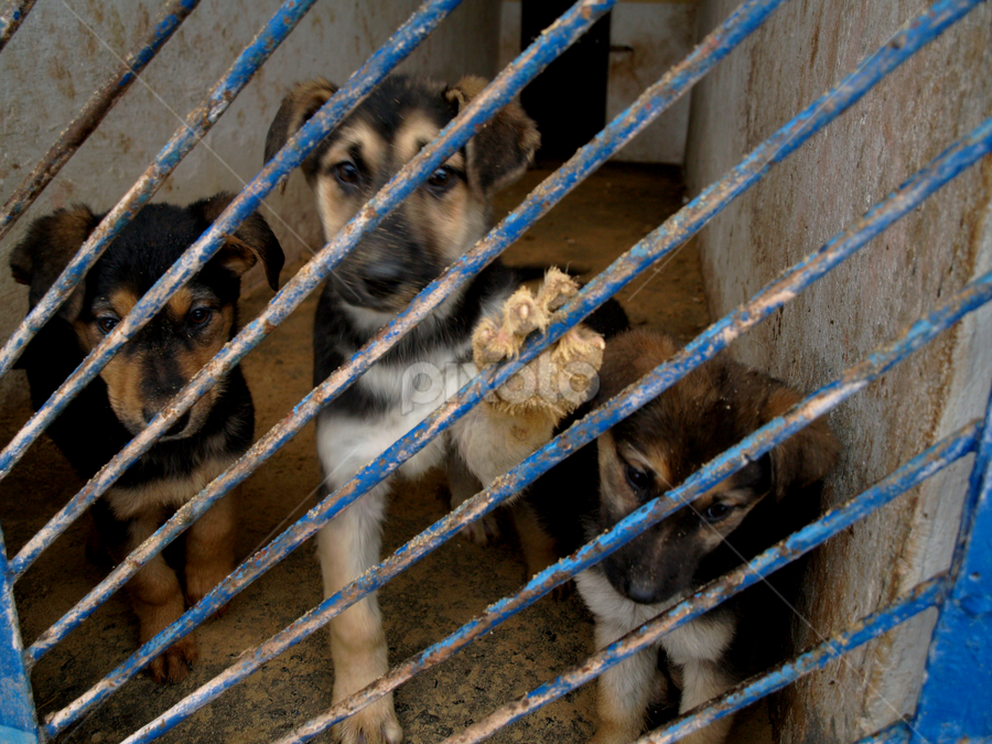 Puppies need home by Jakub Juszyński - Animals - Dogs Puppies ( puppies, doggy, sad, homeless, cage )