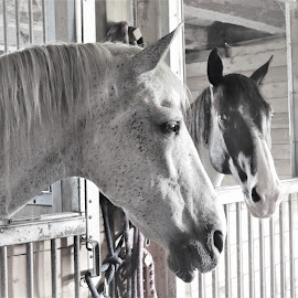 Want to be my friend? by Linda    L Tatler - Black & White Animals