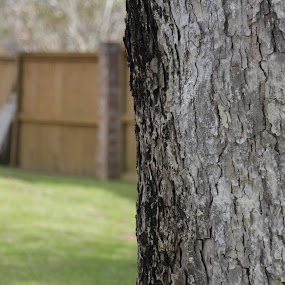 The Lone Pecan Tree by Mike Zegelien - Nature Up Close Trees & Bushes ( macro, tree, bokeh, tree bark, tree trunk )