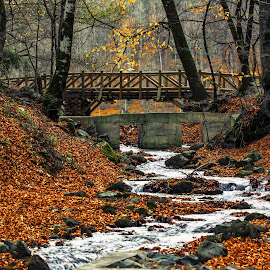 Colors of autumn by Arif Sarıyıldız - City,  Street & Park  City Parks ( bolu, autumn, colors, seben lakes, turkey, bridge )