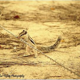 by Rahul Tiwary - Animals Other ( park, street, pixoto, photography, animal )