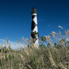 Cape Look Out by Thomas Shaw - Landscapes Beaches ( water, clouds, sand, cape look out, grass, lighthouse, white, seaoats, ocean, coast, north carolina, sky, blue, look out, light, black )