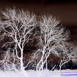 Trees by Ann Seedhouse - Digital Art Places ( field, digital edit, infared, trees, landscape )