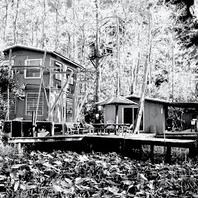 Hoot Owl Camp by Chris Wilson - Buildings & Architecture Homes ( camp, national park, nature, florida, lilly pads, trees, everglades, sw florida, landscape, cypress trees, swamp, dock )