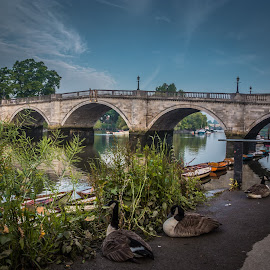 Richmond Bridge Surrey by Mark Freeman - Buildings & Architecture Bridges & Suspended Structures ( bridge,  )