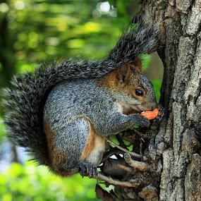 Tasty by Esteban Rios - Animals Other Mammals ( nature, forest, squirrel )
