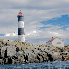 Lighting the way by Debbie Hunt - Buildings & Architecture Other Exteriors ( canada, sea lions, lighthouse, ocean )