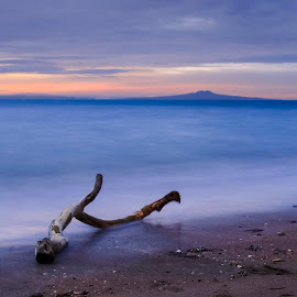 Rangitoto by Johan Koch - Landscapes Beaches ( rangitoto, beach, log, new zealand.dawn )