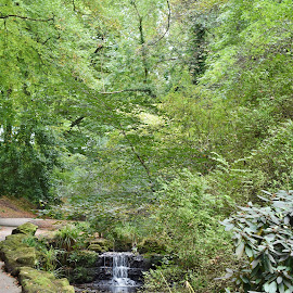 Waterfall through the woods  by Eloise Rawling - Landscapes Waterscapes ( autumn, waterfall, trees, woods )