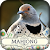 Hidden Mahjong: Winter Birding file APK Free for PC, smart TV Download