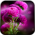 App Live Wallpaper - Flowers APK for Windows Phone