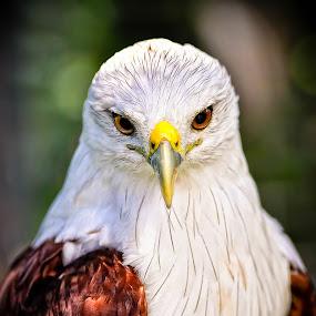 by Paulus Tino - Animals Birds