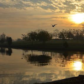 November morning by Kati Raileanu - Landscapes Waterscapes