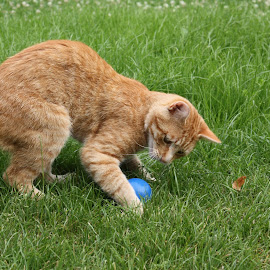 playing ball by Carola Mellentin - Animals - Cats Playing