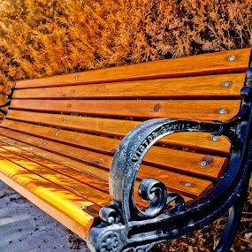 Golden Bench by Barbara Brock - Artistic Objects Furniture ( city bench, park bench, wood bench,  )