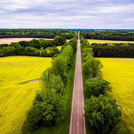 Fields of Yellow by Eric Criswell - Landscapes Prairies, Meadows & Fields ( greenville, drone, highway, grenada, trees, aerial, road, yellow, flowers, mississippi, fields )