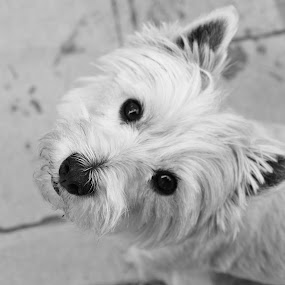 Hello Puppy by Juli Paul - Animals - Dogs Portraits ( fuzzy, cute, dog, nose )