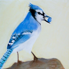 Bluejay by Carmina Shan - Drawing All Drawing ( bird, blue, blue bird, feathers, bluejay )
