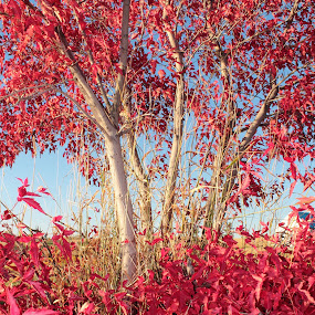 Red Tree by Adria Martin - Nature Up Close Trees & Bushes