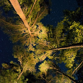 In the pines by Marietta Caldwell - Landscapes Starscapes ( stars, lightpainting, trees, landscape, nightscape )