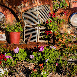 Flower Power by Tony Burnard - Transportation Automobiles ( car, old, vehicle, rust, abandoned )