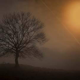 Lonely Tree in the Morning by Ariseanu Genu - Nature Up Close Trees & Bushes