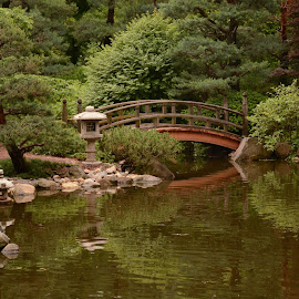 Bridge in the Garden by Robert Coffey - City,  Street & Park  City Parks ( pond, foliage, japanese, reflection, rocks, garden, bridge, trees )