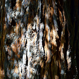 Old Tree Skin by Rob Bradshaw - Nature Up Close Trees & Bushes ( tree skin, tree bark, old tree, tree, skin )