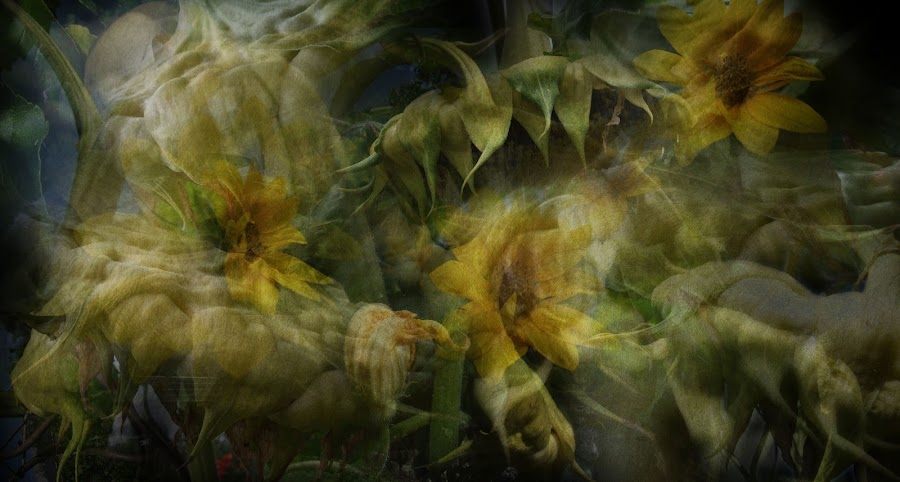 abundance by Brut Carniollus - Digital Art Abstract ( abstract, digital collage, sunflowers, conceptual, floral, , World, Beauty, Beautiful, Representing, Special, watercolour, painting, photographs, skills, photoshop, program, pen, technical )
