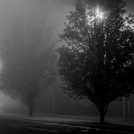 Dark foggy night by Jan Crawford - Black & White Street & Candid ( lights, black and white, fog, toowoomba, night, road )