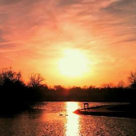 Sunset Stroll by Nancy Tonkin - Landscapes Sunsets & Sunrises ( reflection, nature, sunset, geese, pond )